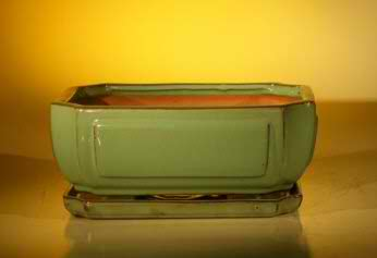 Bonsai Pot - Professional Series Rectangle - Blue Color