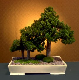 Preserved Juniper Bonsai Tree-Forest Grp Style(Not living tree)